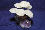 Gem Tree rock crystal plate on Amethyst